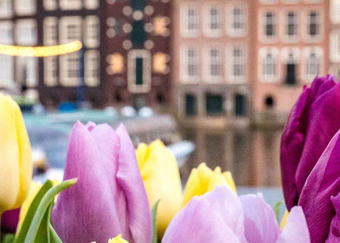 Hollande des fleurs