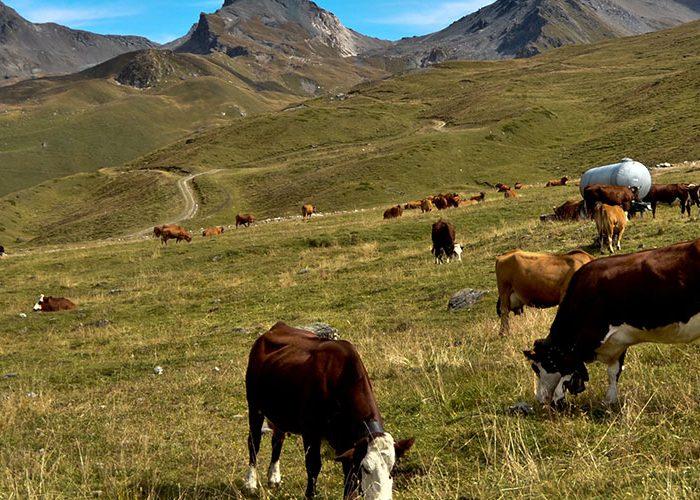 Tyrol et transhumance